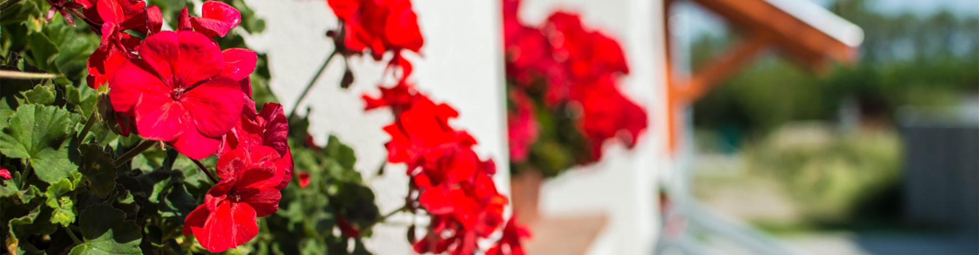 Kertész vendégház, apartman Hegykő